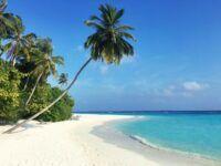 Malediven Palme Strand Unsplash